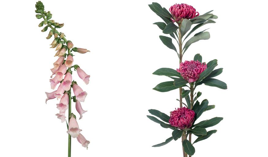 jardin fleuri et coloré