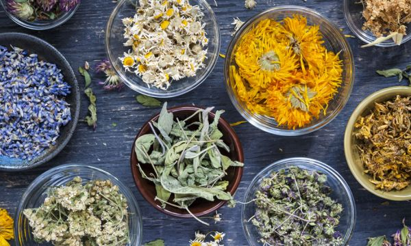 Comment préparer de la tisane maison avec les plantes que l'on trouve au jardin ?