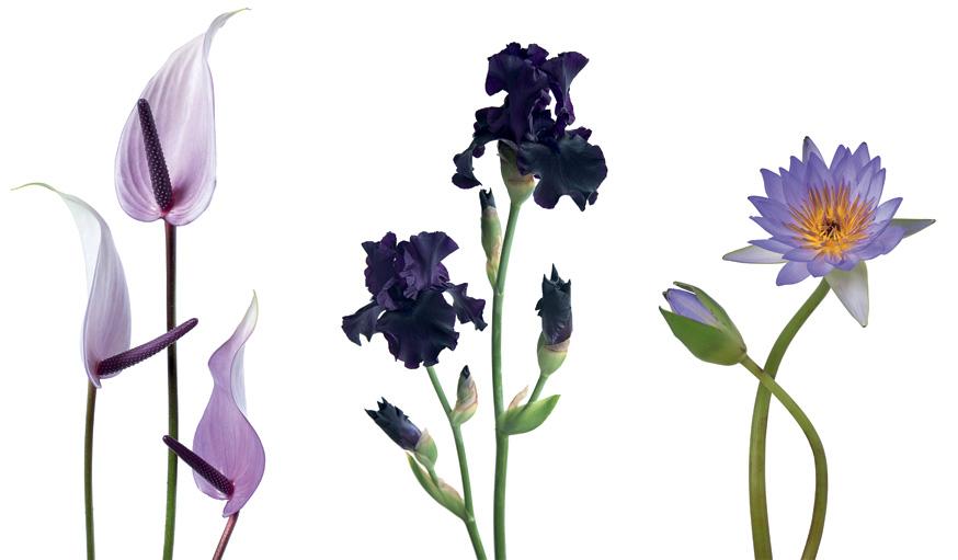 jardin coloré et fleuri