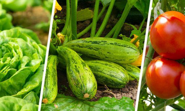 7 légumes super faciles à cultiver quand on débute au potager