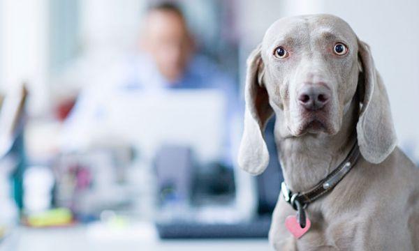 Une nouvelle solution surprenante pour retrouver les chiens perdus