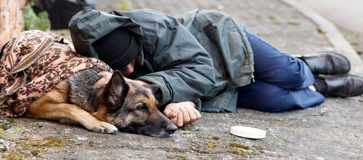 Des étudiants en école vétérinaire soignent gratuitement les animaux des sans-abris