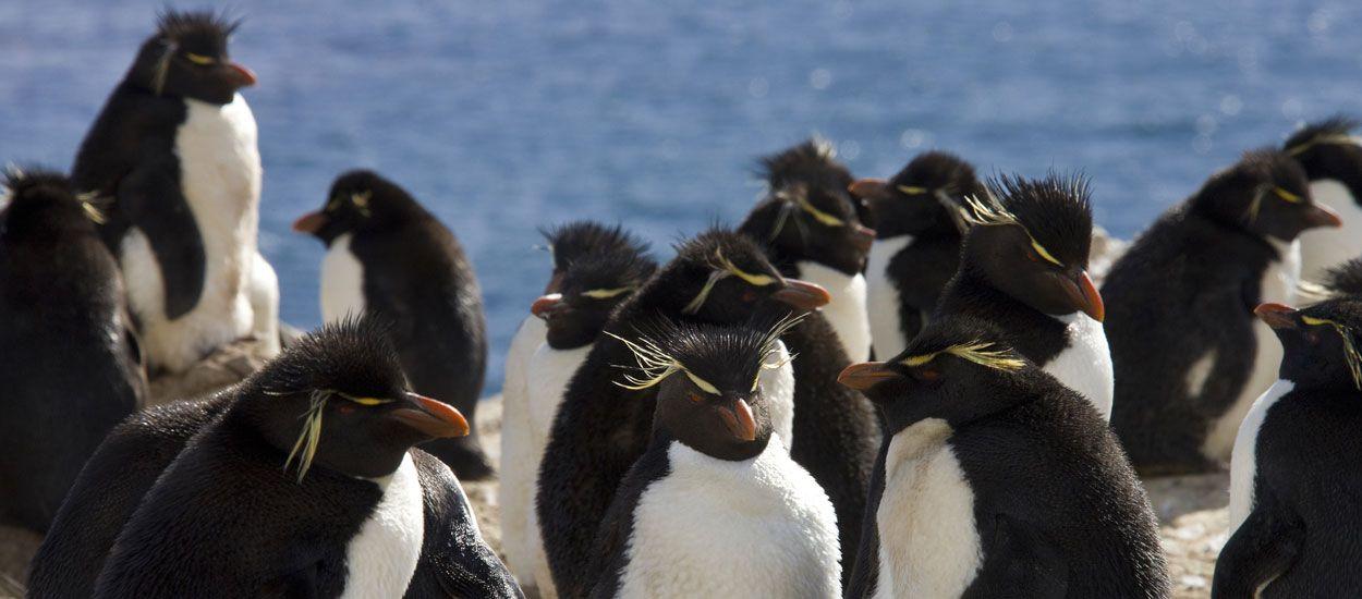 Et si vous achetiez cette île des Malouines pour vivre entouré de pingouins ?