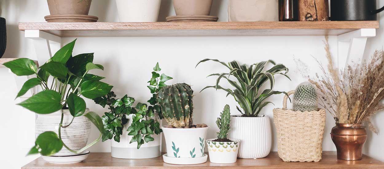 Nos plantes d'intérieur ne sont ni locales ni écolo : nos solutions pour changer