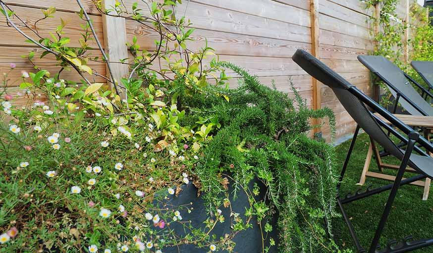 Bacs à fleurs dans le jardin de soleil
