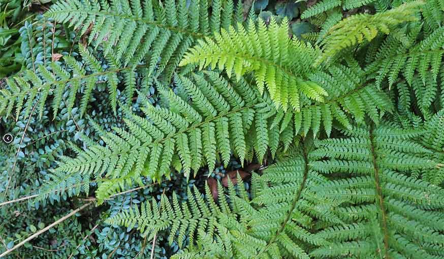 Gros plan sur les plantes et les fougères