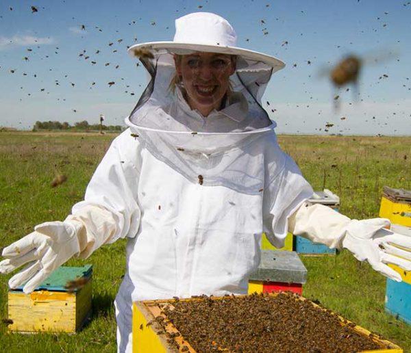 Un essaim d'abeilles chez vous ? Trouvez ici un apiculteur pour le récupérer et en prendre soin