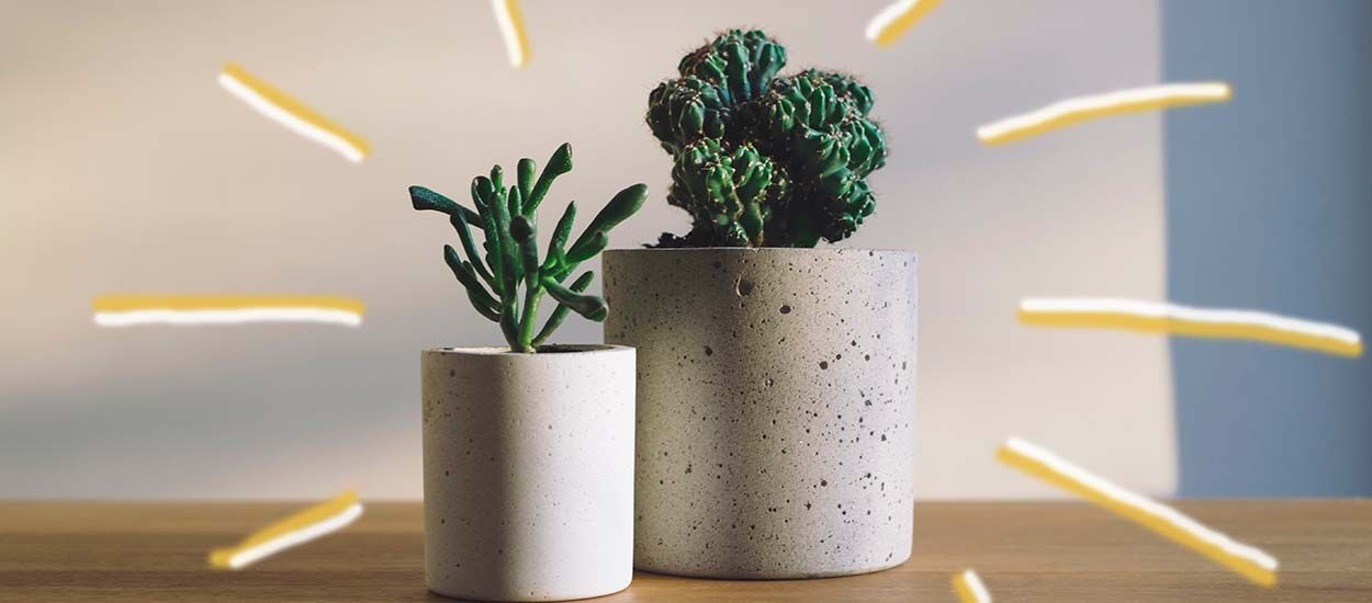 Quelle est votre plante totem ? Faites le test !
