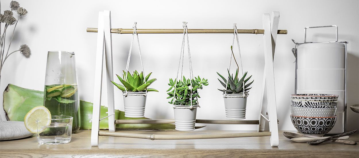 Tuto : Fabriquez une petite suspension pour mettre en valeur vos succulentes
