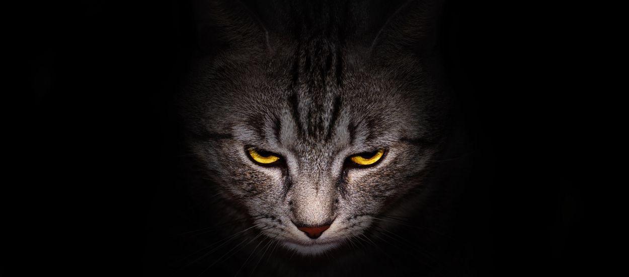 D'après une étude, les chats ne seraient pas si méchants que ça