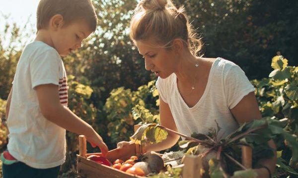 Potager : 8 légumes oubliés à planter en automne