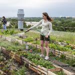 Potager urbain pollution légumes air terre
