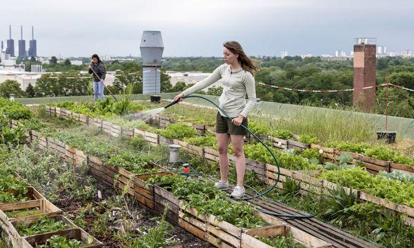 Cultiver des fruits et légumes en ville est-il dangereux pour la santé ?