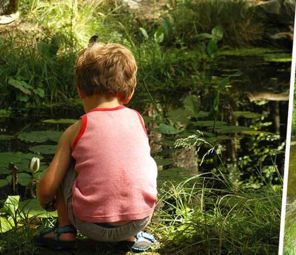 Créez une mare en quelques étapes simples pour favoriser la biodiversité au jardin