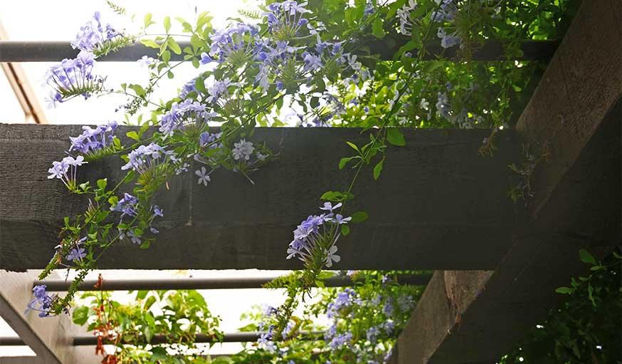 Avant après jardin Marseille avec pergola detail fleurs