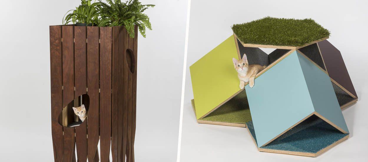 Des architectes inventent des cabanes pour les chats afin de récolter des dons