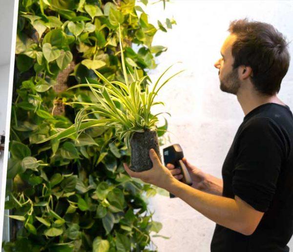Quel mur végétal intérieur choisir : naturel, artificiel ou stabilisé ?