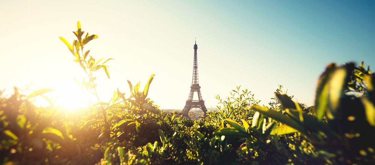 Stop au bitume : la ville de Paris met en place un dispositif pour végétaliser les trottoirs