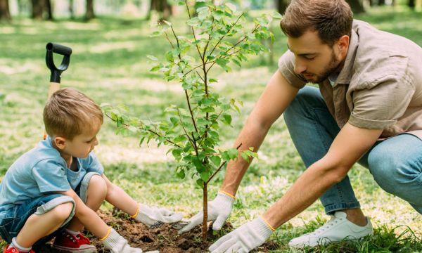 Voici comment faire pousser une petite forêt n'importe où en ville (ou au jardin)