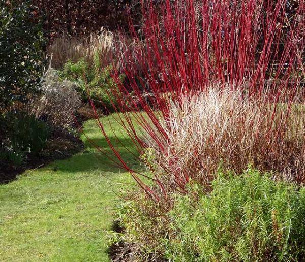 7 arbustes à planter en hiver pour colorer votre jardin