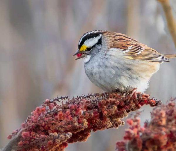 9 plantes et arbustes à planter dans son jardin pour nourrir les oiseaux en hiver