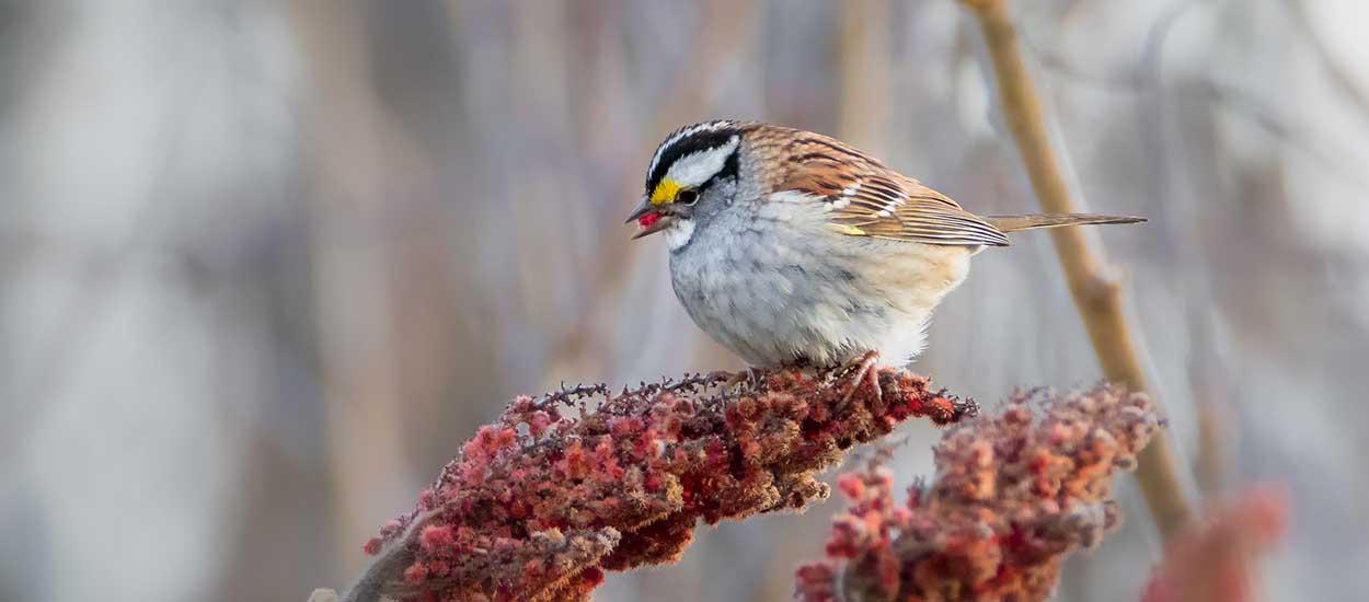 Entendre les oiseaux rend aussi heureux que de toucher une prime !