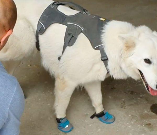 Voici le premier chien en France capable de détecter la mérule, ce champignon qui détruit les maisons