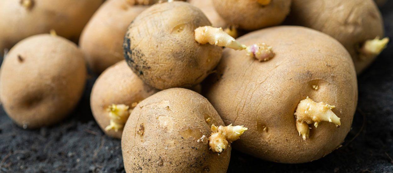 6 astuces anti-gaspi pour ne pas jeter les pommes de terre germées (et utiliser l'eau de cuisson)