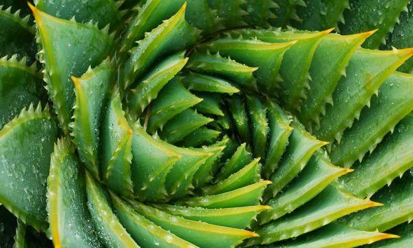 Plantes qui chantent, se déplacent ou produisent de l'électricité : 5 inventions végétales incroyables