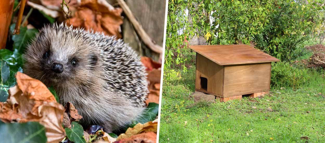 Tuto : Construisez une cabane pour hérissons à mettre dans le jardin