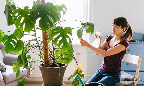 L'astuce pour avoir des feuilles bien brillantes (sans produit chimique)