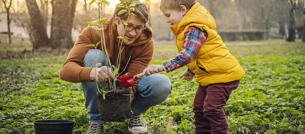 Conseils de jardiniers pour planter un arbre (et éviter qu'il ne meure au bout de quelques mois)
