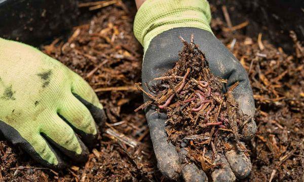La méthode ultime pour capturer des vers de terre sauvages pour votre lombricomposteur !