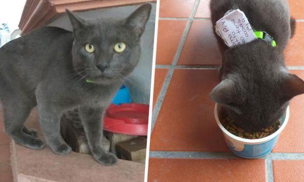 Elle découvre que son chat mène une double vie !