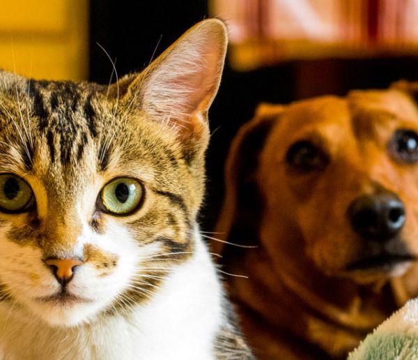 Avec ce site, vous pouvez faire garder vos animaux gratuitement lorsque vous êtes absent