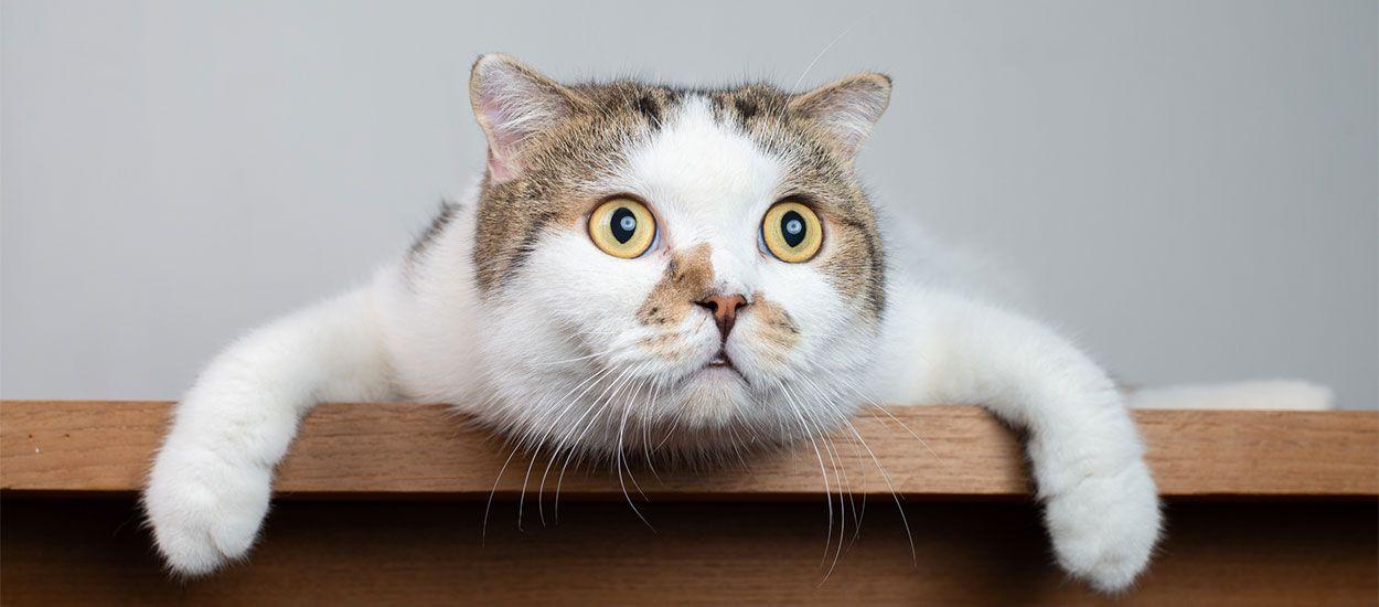 Cette litière connectée surveille la santé de votre chat (et lui évite le stress du véto !)