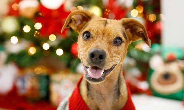 Offrir un animal à Noël : est-ce une bonne idée ?