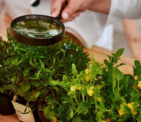Cette étude très sérieuse prouve que les plantes crient quand elles sont stressées !