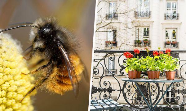 Adoptez des abeilles sauvages (qui ne piquent pas) à la maison et faites-les grandir !