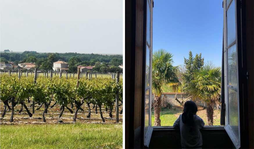 vue sur le domaine viticole