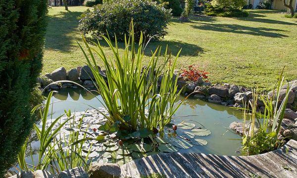 Dans cette commune, une aide financière est versée à ceux qui creusent une mare dans leur jardin
