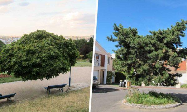 Ce photographe retouche ses photos d'arbres pour changer le regard sur la nature urbaine