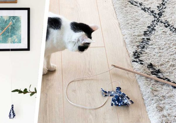 bobine elastique pour jouet chat