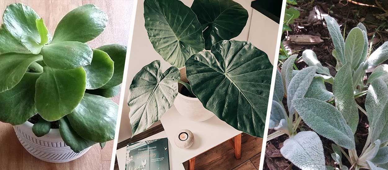 Connaissez-vous ces 5 plantes qui ressemblent à des oreilles d'animaux ?