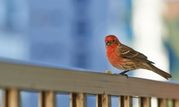 Comment transformer votre balcon en refuge pour la biodiversité ?