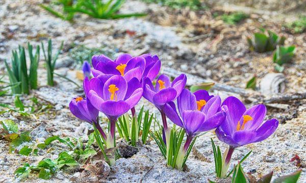 Jardin, ménage, compost... tout ce que vous pouvez faire avec de la cendre de bois