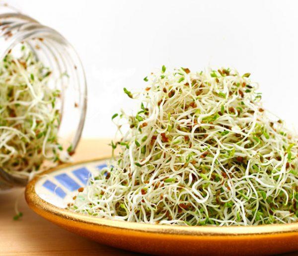 Tuto : voici comment faire pousser des graines germées (et ne plus se ruiner dans les boutiques bio)