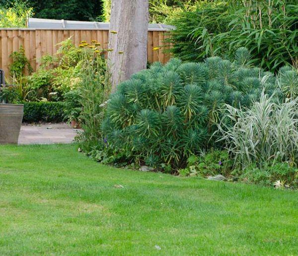 Calendrier du jardinier : Voici comment entretenir votre pelouse toute l'année