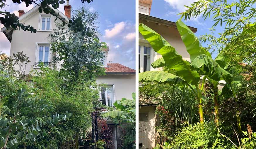 plantes exotiques jardin de ville