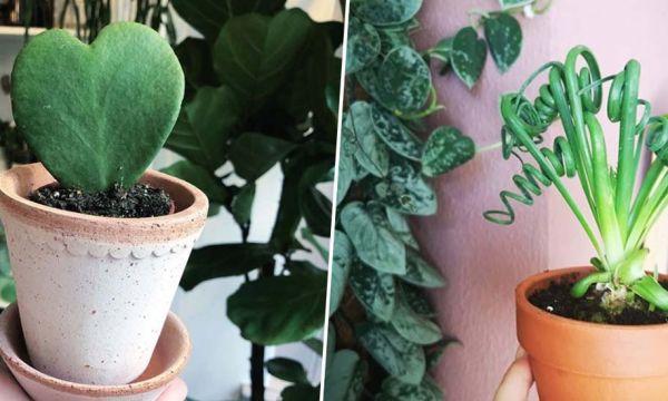 6 plantes pour lutter contre le blues de l'hiver